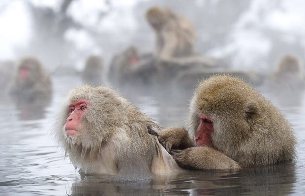 snow-monkeys (14)