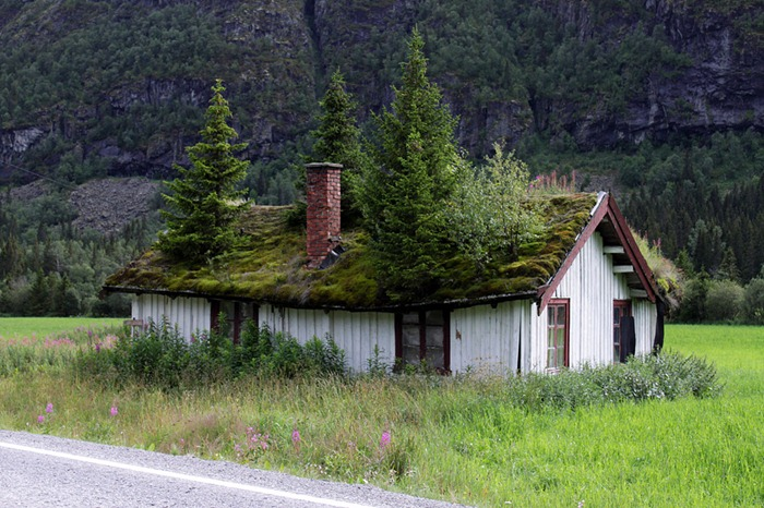 The Grass Roofs Of Norway Amusing Planet