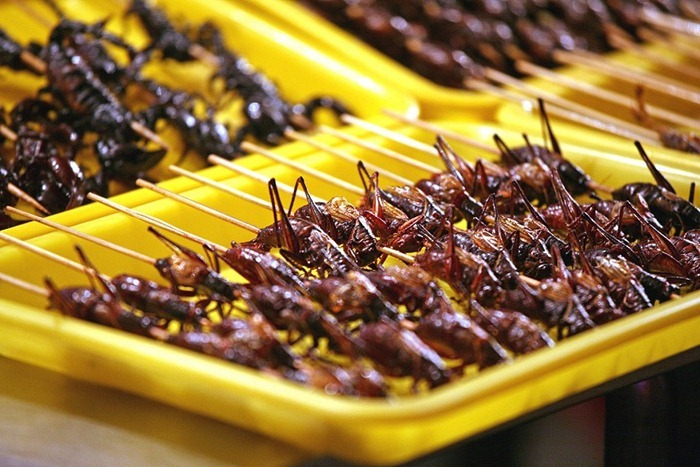 food-as-insects (2)
