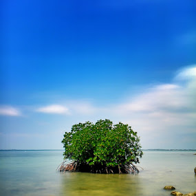 Mangroves are not friends by Irfan Efendi - Landscapes Beaches