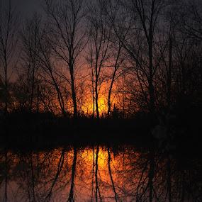 Sherbet Sunset by Jenny Gandert - Landscapes Sunsets & Sunrises ( gandert, reflection, sunset, trees )
