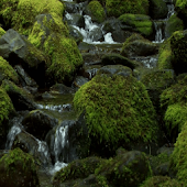 Scottish Mossy Creek LWP