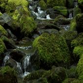 Scottish Mossy Creek LWP