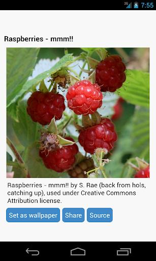玩免費個人化APP|下載树莓壁纸 app不用錢|硬是要APP