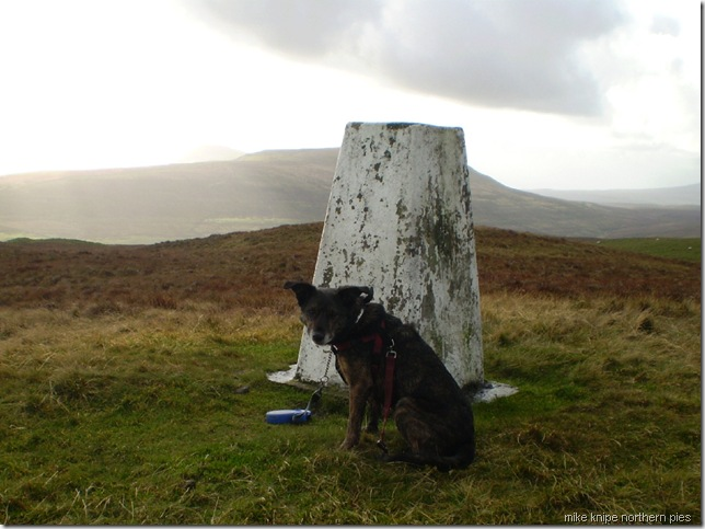 horsehead trig and dog