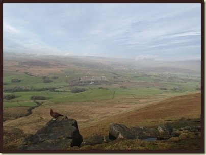 Grousey tries not to be distracted by the view to Grassington, Wharfedale and Buckden Pike