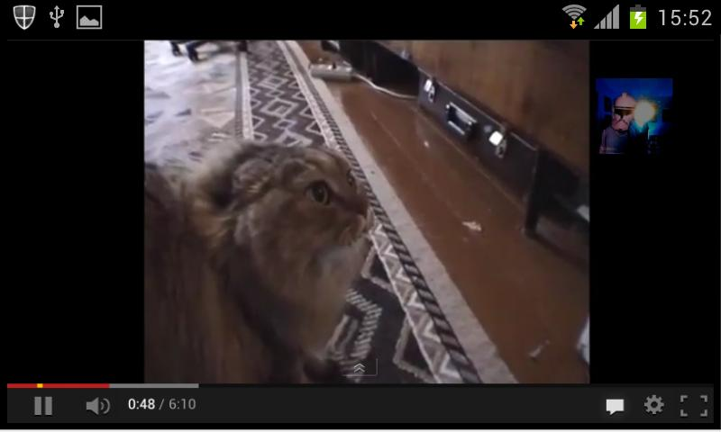 Videos de gatos - screenshot