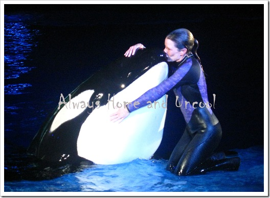 Dawn-Brancheau-seaworld-killer-world-AHUC