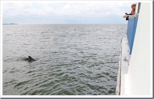 Tarpon Springs dolfijn4