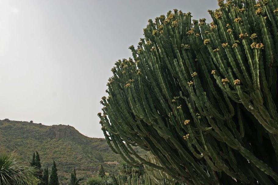 Gran Canaria, ogród botaniczny