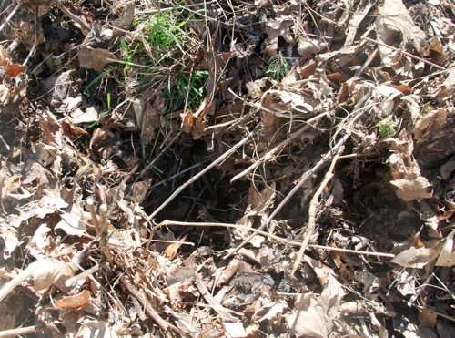 Compost3 050411