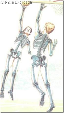 funcion de los huesos