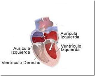 camaras del corazon