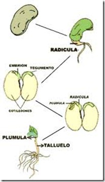 desarrollo vegetal 2