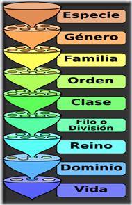 clasificacion cientifica jerarquia taxonomia