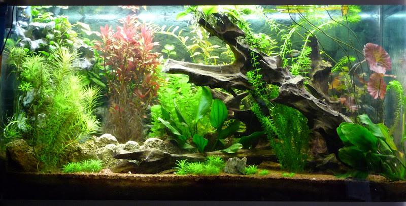 Decor Poster Aquarium