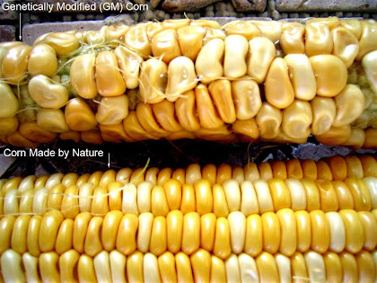 Genetically Modified GM Foods