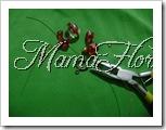 mamaflor-9836