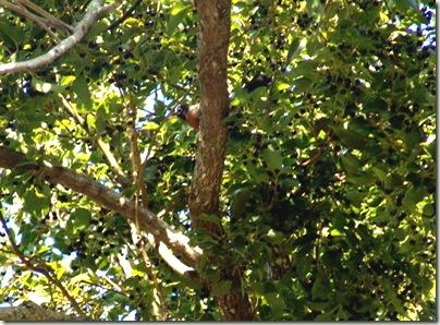 bird in treesm