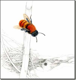 Tawney mining bee