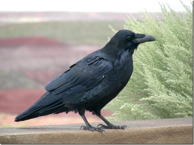 raven painted desert