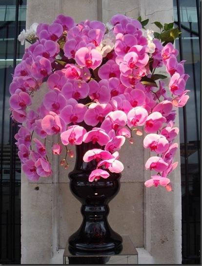 DSC01789 Laura Kuy Flowers UK