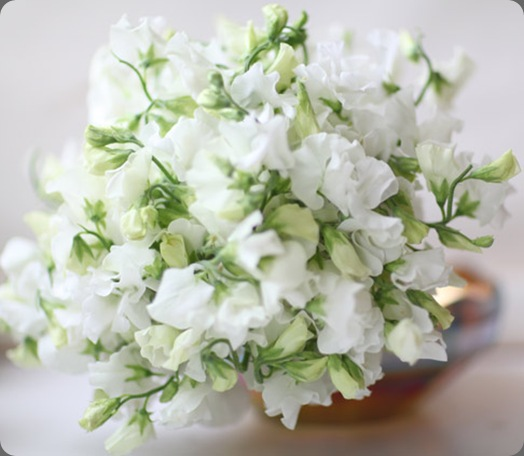 botanical brouhaha Sweet PeasWhite Sweet Pea Flower