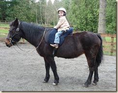 Horses 073