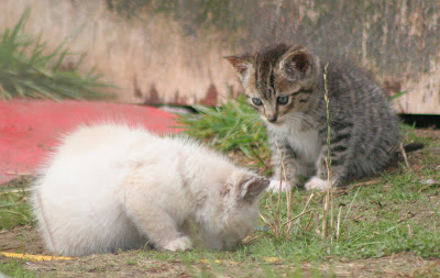 two feral kittens,what have you found, what is their future