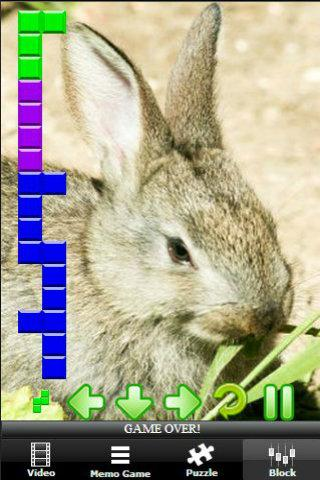 【免費解謎App】Bunny Pro Skater-APP點子