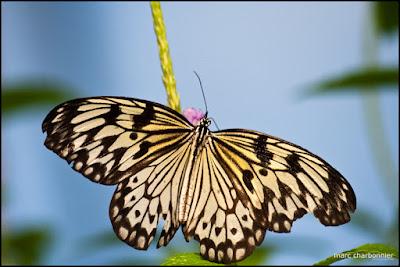 papillorama-8.jpg