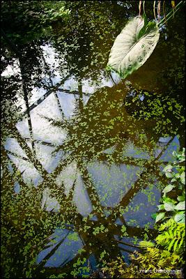 papillorama-12.jpg