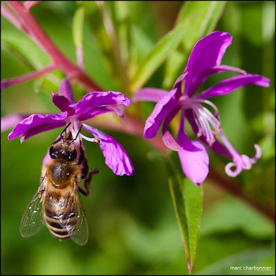 abeilles-3.jpg