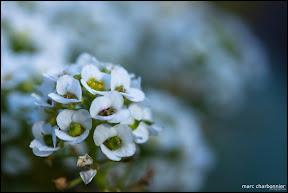 Jardins Secrets - Vaulx-8.jpg