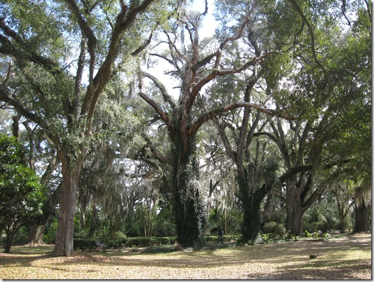 THE MYRTLES 053