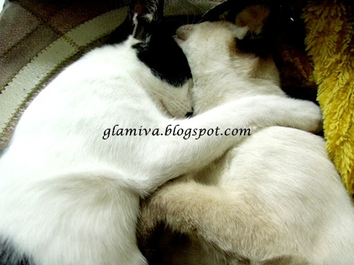 brother love cat snowy and bensi