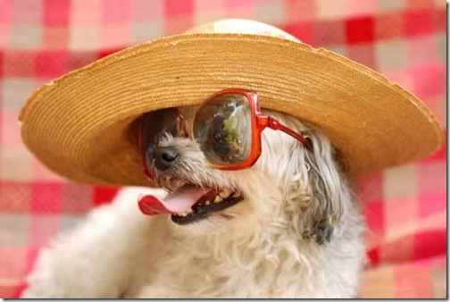 dog-picture-photo-hat-sunglasses