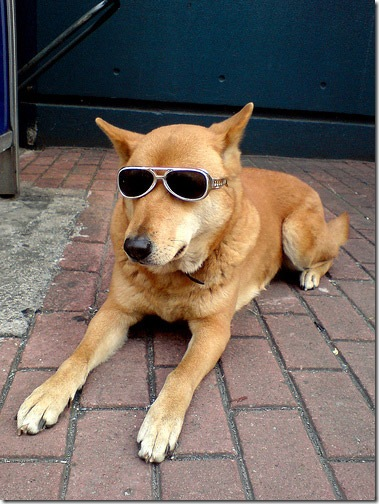 dog-sunglasses-3
