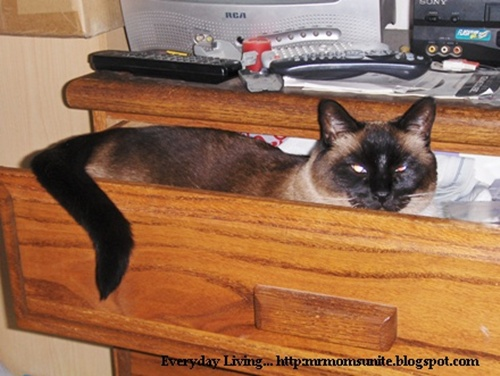 photo of Koko in our dresser drawer