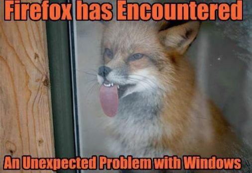 photo of a fox licking a window: firefox has encountered a problem with windows