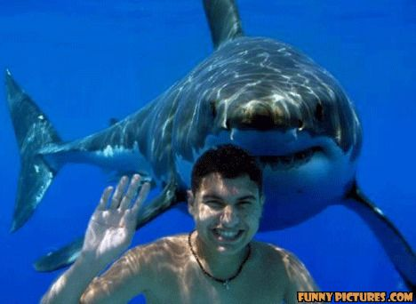 photo of a shark swimming up behind a guy