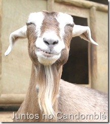 animais yoruba - portugues - candomble