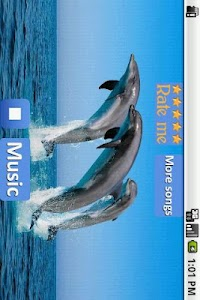 Dolphins - Sound to relax screenshot 2