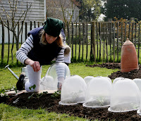 Using Garden Cloches from Haxnicks