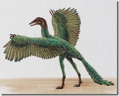 Archaeopteryx: il primo uccello conosciuto.