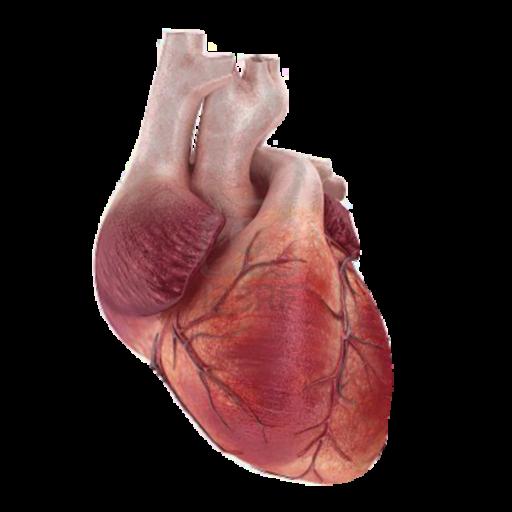 Heart Traffic 解謎 App LOGO-APP試玩