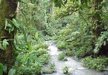 biodiversity rainforest - photo #34