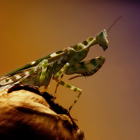 Side View :) by Marcelino Moningka - Animals Insects & Spiders
