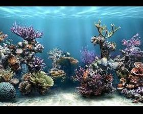 descanso de tela de aquario em movimento