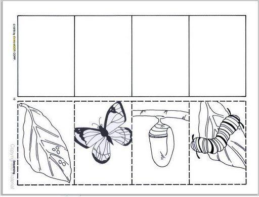Secuencia Oruga Mariposa Para Colorear